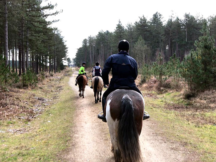Forest Riding at Studland Stables in Dorset
