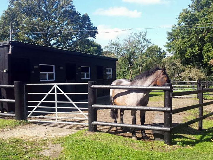 Bring your own horse to stay at Studland Stables